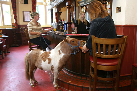 Name:  pubhorse1.jpg Views: 1168 Size:  49.5 KB